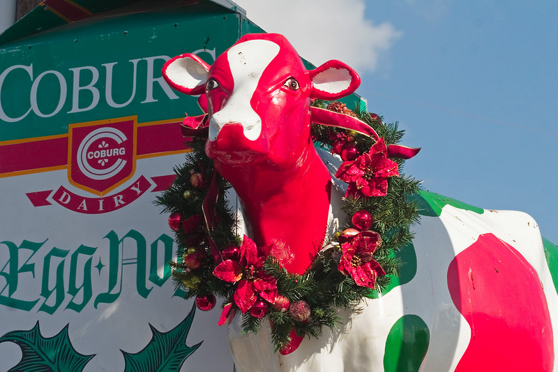 """The Coburg Cow Does Christmas<br /> 12/18/2006<br /> <br /> Googling:<br /> here in Charleston, we have constant barometers of how life is going. It's not officially the holiday season until the Coburg Cow is decorated. For a long time, there was a Coburg dairy near my house, but they sold to a larger corporation about 15 years ago. However, in keeping with our """"tradition is everything"""" attitude, the Coburg Cow remains a fixture in our lives. For those of you older than about 45, you remember when places advertised with some sort of mechanized sign. For almost 50 years, Bessie (the Coburg Cow) has gone round and round and is still considered a landmark.<br /> _______________<br /> <br /> She is sometimes """"stolen"""" by students as a prank.  Other than when she is removed as a hurricane precaution, or """"stolen"""", she has been a tradition longer than I have lived here.  She is on the other side of Charleston from me.  I was over there today, saw her with Egg Nog (usually milk), and I had to have a photo to share with you all.  Bill grumbled, foretold terrible traffic accidents, but he did turn around, and here she is!<br /> ginger"""