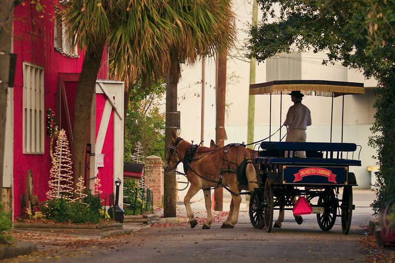 "Going Home down a Charleston<br /> alley.  The Palmetto Carriage <br /> horses are stabled here.  I like <br /> to just sit outside in the alley <br /> to see what might come along.<br /> Kind of ""birding"" in the city.<br /> It is peaceful.  This is with<br /> my Christmas decoration theme, <br /> as they stable is decorated.  The <br /> outside decorations are seen here.<br /> <br /> The inside ones..........are my <br /> Daily Photo."
