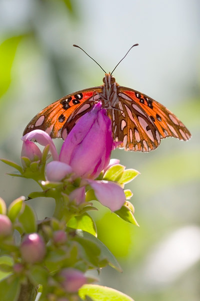 There is still<br /> a small world<br /> with flowers <br /> and butterflys.
