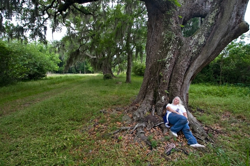 ginger at Magnolia Gardens, Charleston, SC