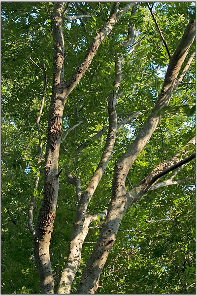 If Trees Had Hands........