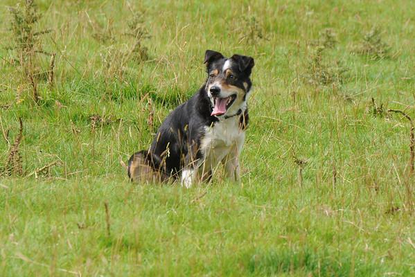 English National Sheepdogs 2008