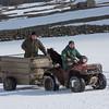 Hawes Sheepdogs 010