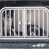 Hawes Sheepdogs 003