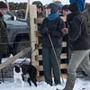 Hawes Sheepdogs 017