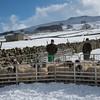 Hawes Sheepdogs 009