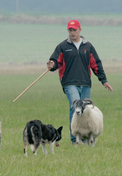 international sheepdog 2006
