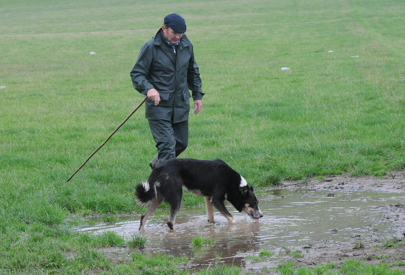 INTERNATIOnal SHEEPDOGS 2008