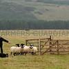 INT sheepdog trials.