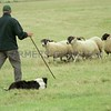 INT SHEEPDOGS 4