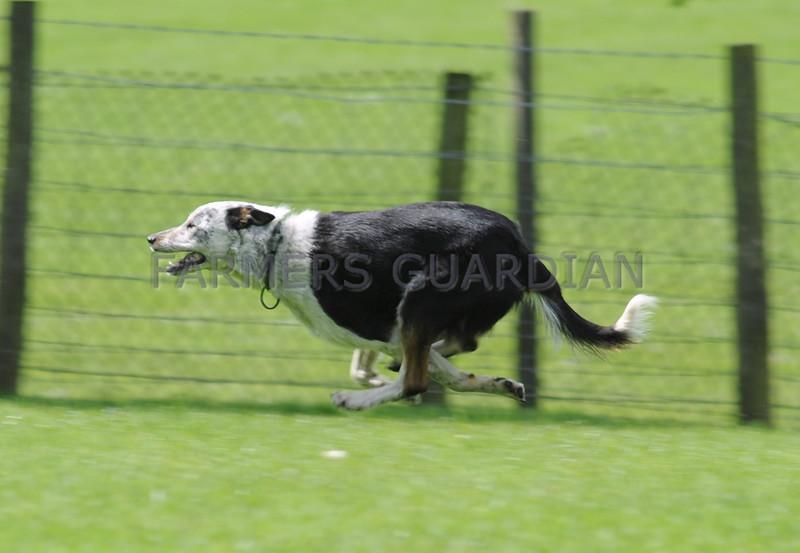 Skipton dogs 12