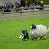 Skipton Sheepdogs-9093