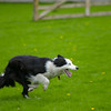 Skipton Sheepdogs-9058