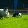 Skipton Sheepdogs-8896