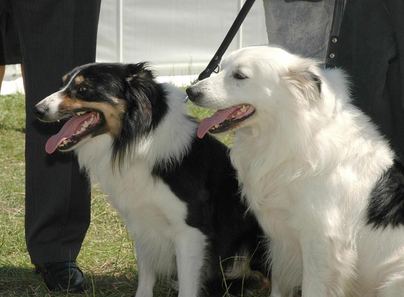 WORLD DOGS GERMAN