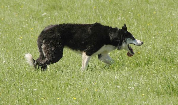 World Dogs 2005