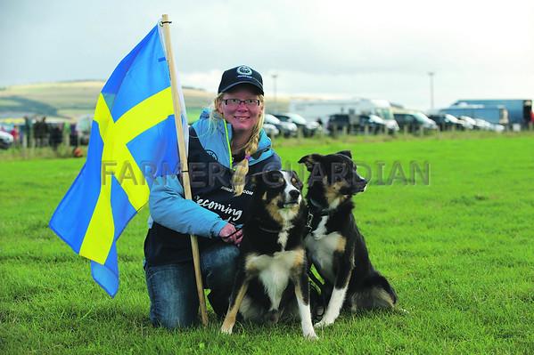 World Sheepdog trials 2014