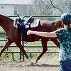 "Sarah Brock  works with  Karma the horse at Gateways to Transformation Farm in Longmont.<br /> For more photos and a video of riding, go to  <a href=""http://www.dailycamera.com"">http://www.dailycamera.com</a>.<br /> Cliff Grassmick  / August 31, 2012"