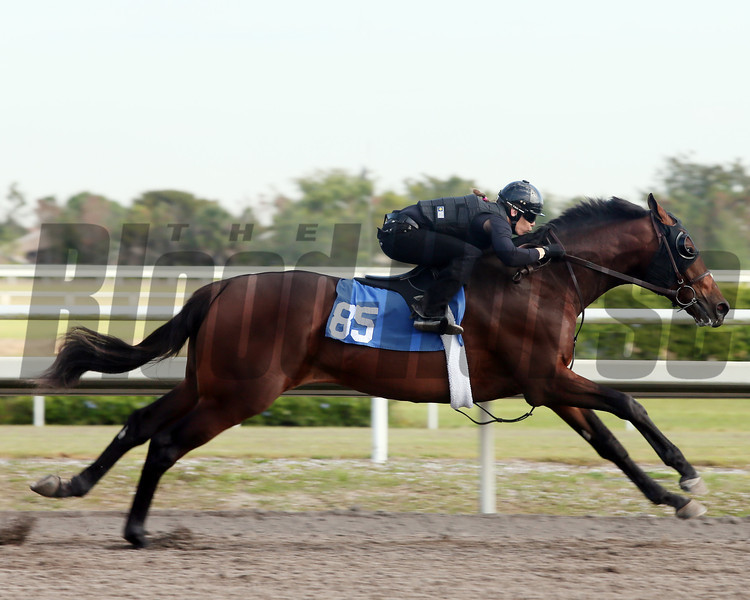 Hip 85, 2013 Fasig-Tipton Selected Two-Year Olds in Training Sale.<br /> colt; Unbridled's Song - Wild Gams, by Forest Wildcat<br /> Photosbyz.com
