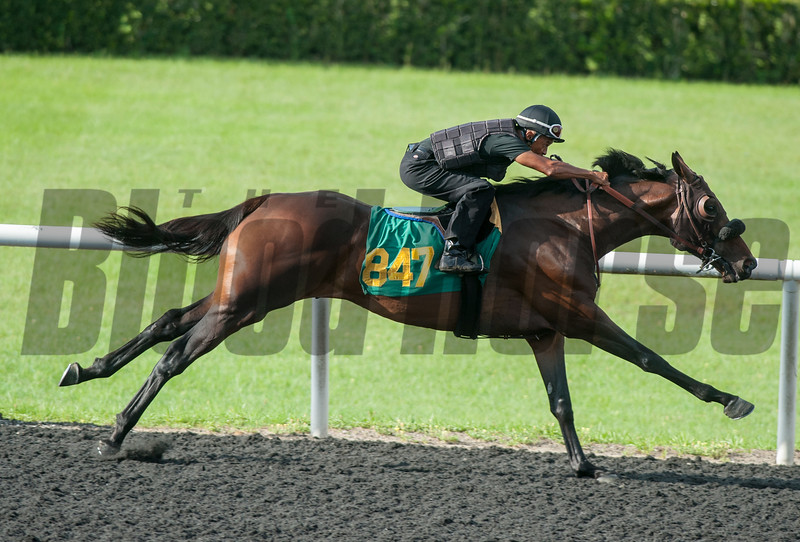 Hip847. Uncle Mo- Pretty Clear     . Work 33.2    @ OBS 2yrs old sales . in Ocala   Jun 10th 2018.<br />   © Joe DiOrio/Winningimages.biz