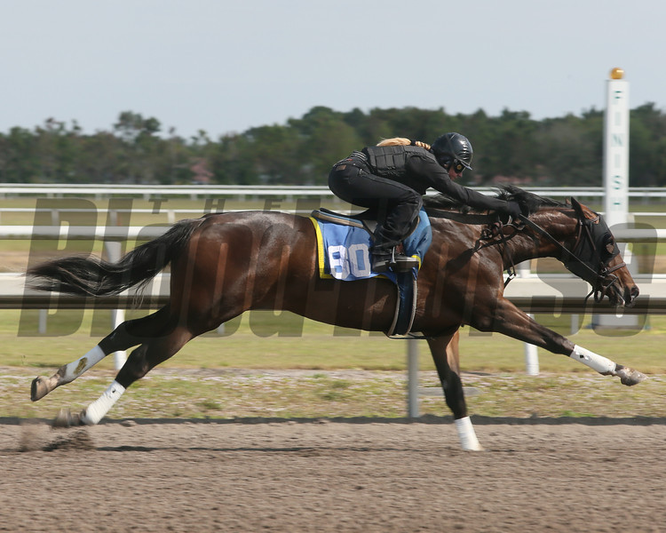 Hip 80, 2013 Fasig-Tipton Selected Two-Year Olds in Training Sale.<br /> filly; Tapit - Unobstructed View, by Yes It's True<br /> Photosbyz.com