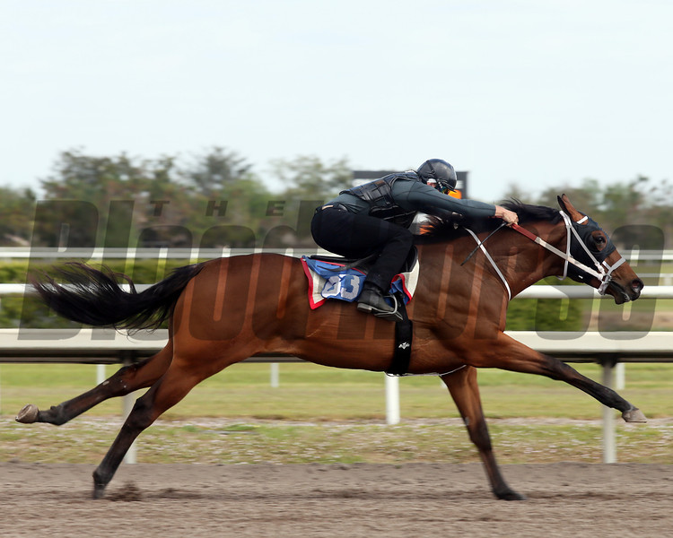 Hip 63, 2013 Fasig-Tipton Selected Two-Year Olds in Training Sale.<br /> colt; Posse - Storm Struck, by Storm Bird<br /> Photosbyz.com