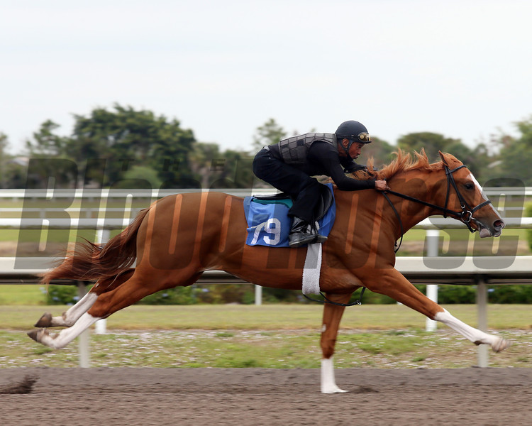 Hip 79, 2013 Fasig-Tipton Selected Two-Year Olds in Training Sale.<br /> colt; Freud - Unbridled Betty, by Unbridled's Song<br /> Photosbyz.com