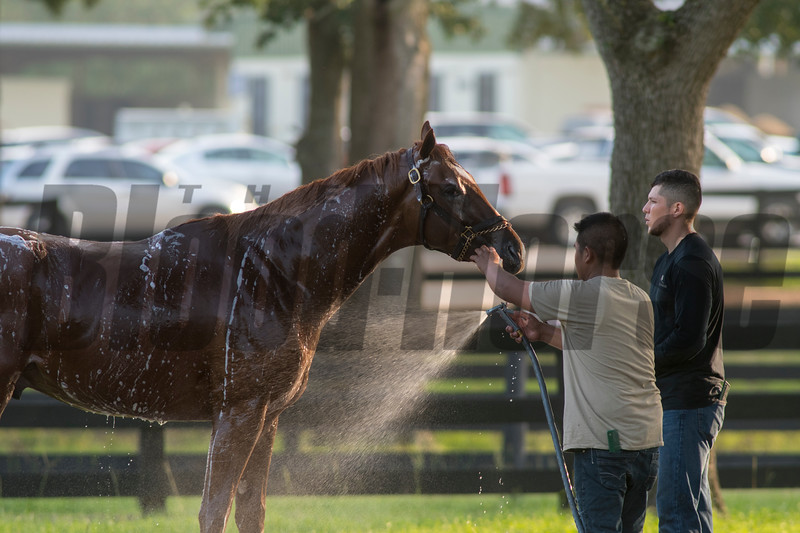 Bathing @ OBS 2yrs old slae . in Ocala   Jun 4th 2018.<br />   © Joe DiOrio/Winningimages.biz