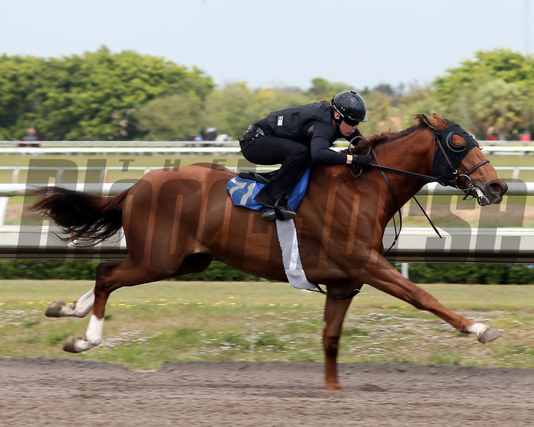 Hip 71, 2013 Fasig-Tipton Selected Two-Year Olds in Training Sale.<br /> colt; Smart Strike - Tejida, by Rahy<br /> Photosbyz.com