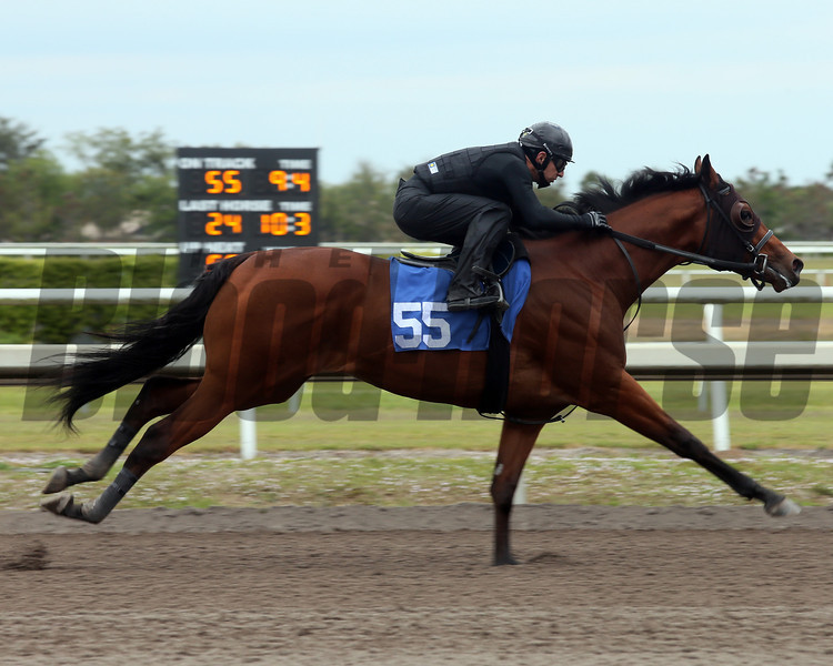 Hip 55, 2013 Fasig-Tipton Selected Two-Year Olds in Training Sale.<br /> colt; U S Ranger - Skybox, by Spend a Buck<br /> Photosbyz.com