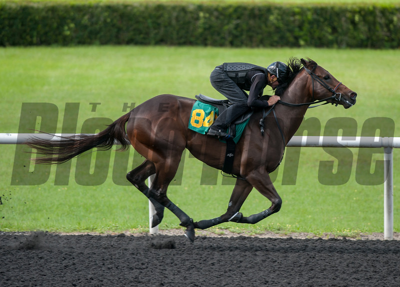 Hip846 Ghostapper- Marvelous Me  work 34.    @ OBS 2yrs old sales . in Ocala   Jun 10th 2018.<br />   © Joe DiOrio/Winningimages.biz