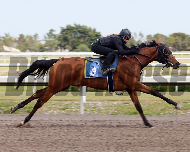 Hip 3, 2013 Fasig-Tipton Selected Two-Year Olds in Training Sale.<br /> filly; Empire Maker - Lady of Peace, by Lord At War (ARG)<br /> Photosbyz.com