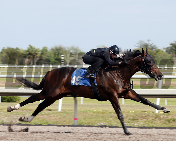 Hip 49, 2013 Fasig-Tipton Selected Two-Year Olds in Training Sale.<br /> colt; Tiz Wonderful -  Schism, by Pulpit<br /> Photosbyz.com