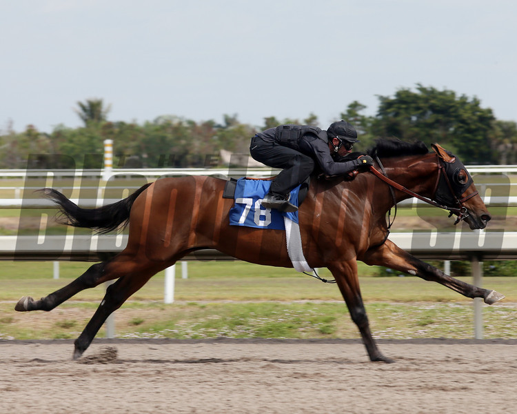 Hip 78, 2013 Fasig-Tipton Selected Two-Year Olds in Training Sale.<br /> colt; Tiznow - Tustarta, by Trempolino<br /> Photosbyz.com