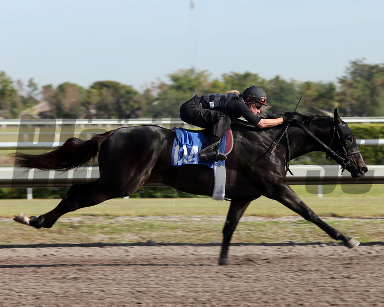 Hip 124,   in 10 flat, 2013 Fasig-Tipton Selected Two-Year Olds in Training Sale.<br /> filly; A. P. Indy - Foxy Danseur, by Mr. Greeley<br /> Photosbyz.com