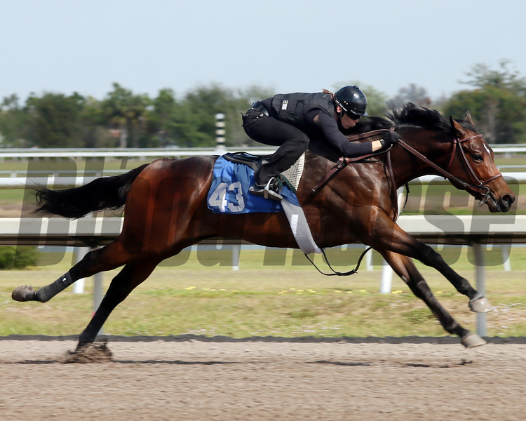 Hip 43,   in 10 flat, 2013 Fasig-Tipton Selected Two-Year Olds in Training Sale.<br /> colt; Malibu Moon - Right Place, by Petionville<br /> Photosbyz.com