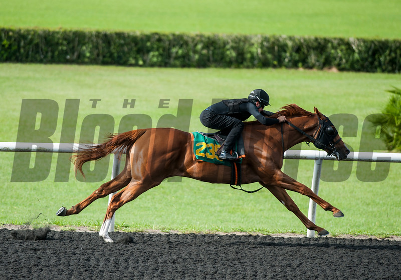 Hip235. New Year's Day- Sign Off . Work 20.4    @ OBS 2yrs old sales . in Ocala   Jun 7 th 2018.<br />   © Joe DiOrio/Winningimages.biz