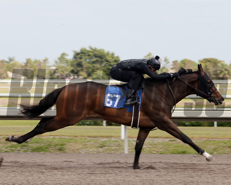 Hip 67, 2013 Fasig-Tipton Selected Two-Year Olds in Training Sale.<br /> filly; Sky Mesa - Summer Wildfire, by Forest Wildcat<br /> Photosbyz.com