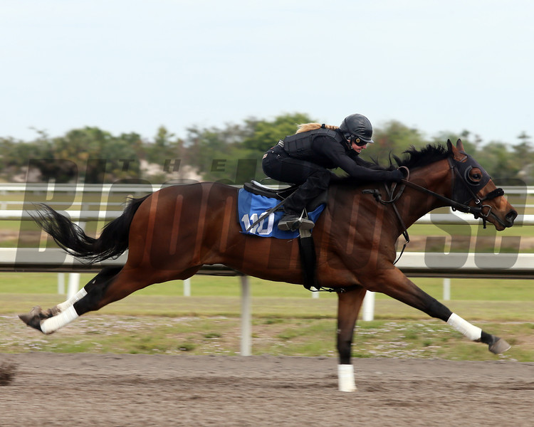 Hip 110, 2013 Fasig-Tipton Selected Two-Year Olds in Training Sale.<br /> colt; Afleet Alex - Corre Scout, by El Corredor<br /> Photosbyz.com