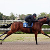 Hip 2, 2013 Fasig-Tipton Selected Two-Year Olds in Training Sale.<br /> colt; Speightstown - Lady Aloma, by Cozzene<br /> Photosbyz.com