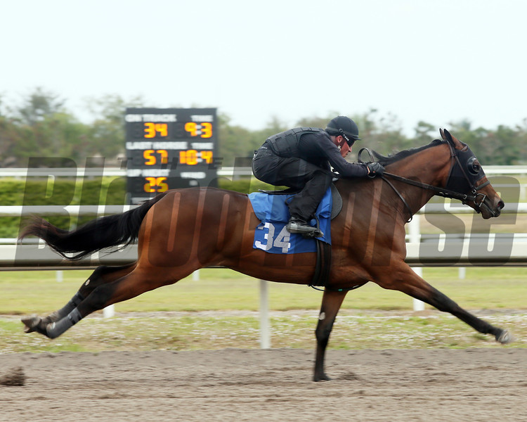 Hip 34, 2013 Fasig-Tipton Selected Two-Year Olds in Training Sale.<br /> filly; Bernardini - Preach It, by Saint Ballado<br /> Photosbyz.com