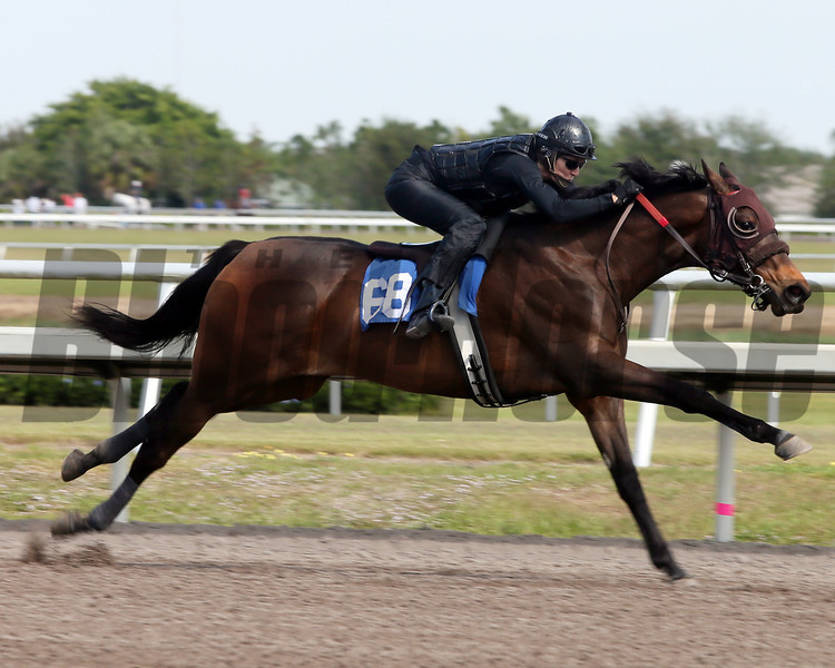 Hip 68, 2013 Fasig-Tipton Selected Two-Year Olds in Training Sale.<br /> filly; Empire Maker - Sweet Problem, by Is It True<br /> Photosbyz.com