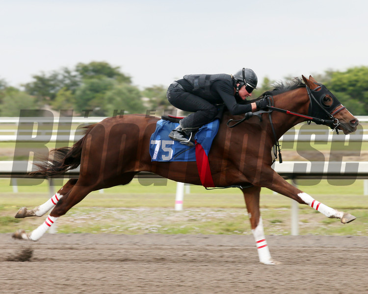 Hip 75, 2013 Fasig-Tipton Selected Two-Year Olds in Training Sale.<br /> filly; Tale of the Cat - Throw to Home, by Grand Slam<br /> Photosbyz.com