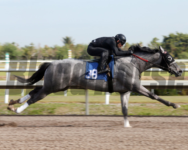 Hip 38, 2013 Fasig-Tipton Selected Two-Year Olds in Training Sale.<br /> colt; Dunkirk - Ransom Bride, by Runaway Groom<br /> Photosbyz.com