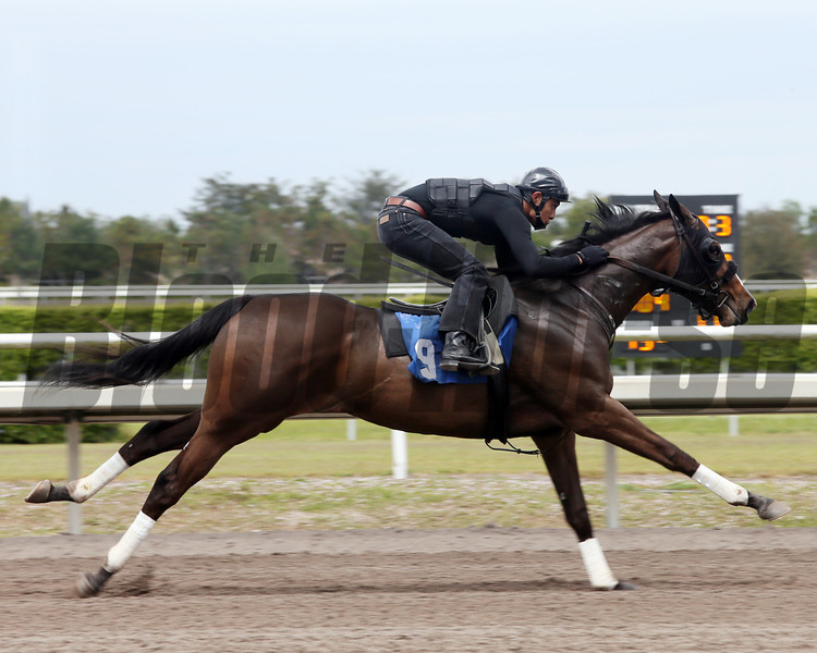Hip 9, 2013 Fasig-Tipton Selected Two-Year Olds in Training Sale.<br /> filly; First Samurai - Magnetic Miss, by Artax<br /> Photosbyz.com
