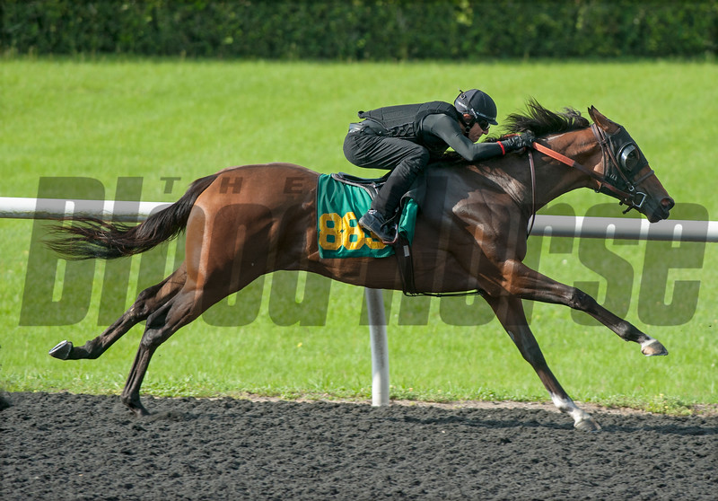 Hip883 Can the Man- Stormy Blast     . Work 21.    @ OBS 2yrs old sales . in Ocala   Jun 10th 2018.<br />   © Joe DiOrio/Winningimages.biz