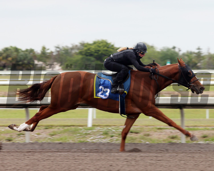 Hip 23, 2013 Fasig-Tipton Selected Two-Year Olds in Training Sale.<br /> filly; Bluegrass Cat - Oatka Idas Destiny, by A. P Jet<br /> Photosbyz.com