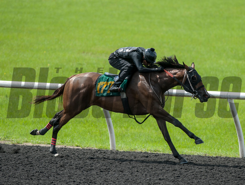 Hip177.  Magicaian - Ristretta.  work 33.1   @ OBS 2yrs old sales . in Ocala   Jun 7 th 2018.<br />   © Joe DiOrio/Winningimages.biz