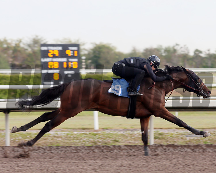 Hip 29, 2013 Fasig-Tipton Selected Two-Year Olds in Training Sale.<br /> colt; Giant's Causeway - Passion, by Came Home<br /> Photosbyz.com