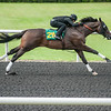Hip211. Scat Daddy-Satulah  work 9.4     @ OBS 2yrs old sales . in Ocala   Jun 7 th 2018.<br />   © Joe DiOrio/Winningimages.biz